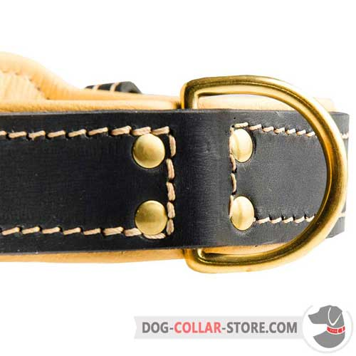 Brass D-Ring on Nappa Padded Leather Dog Collar to Attach your Lead