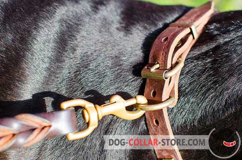 Brass-Plated D-Ring on Leather Dog Collar
