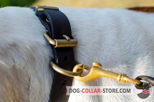 Rust Proof Steel Old Brass Plated D-Ring on Plated Leather Dog Collar for Lead Attachment