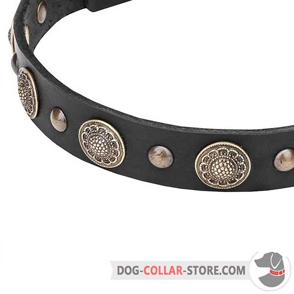 Brass Conchos and Studs on leather dog collar
