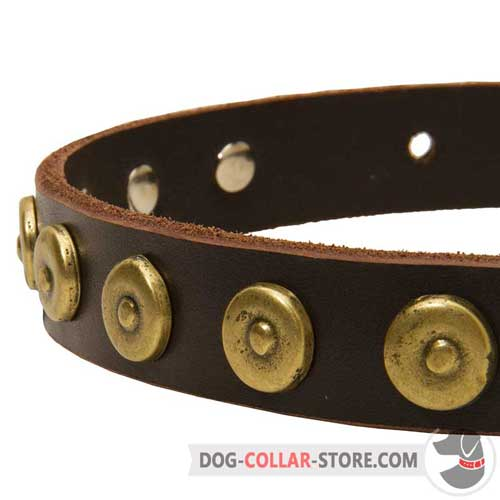 Golden Brass Dotted Circles on Designer Leather Dog Collar