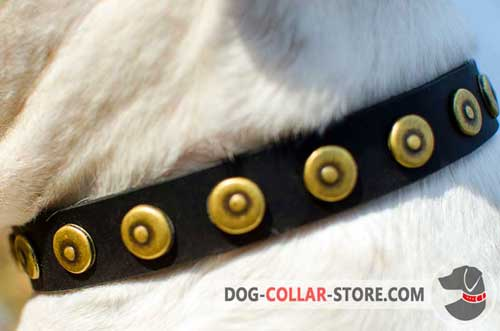 Stylish Brass Dotted Circles on Handcrafted Leather Dog Collar