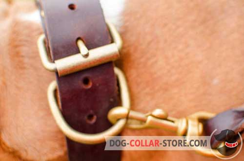 Studded Leather Dog Collar with Solid Brass Fittings