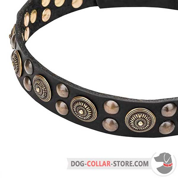 Brass-plated Studs on Dog Collar
