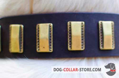 Properly Riveted Brass Plates On Stylish Leather Dog Collar