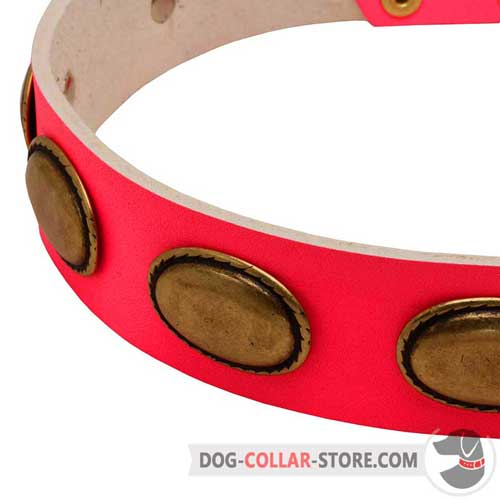Oval Brass Plates on Designer Pink Leather Dog Collar