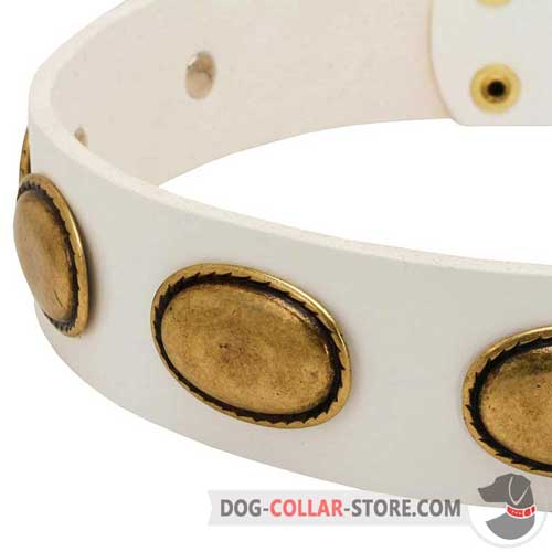 Massive Oval Brass Plates on White Leather Dog Collar