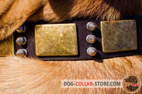 Duly Welded Brass-Plated D-Ring on Painted Leather Dog Collar