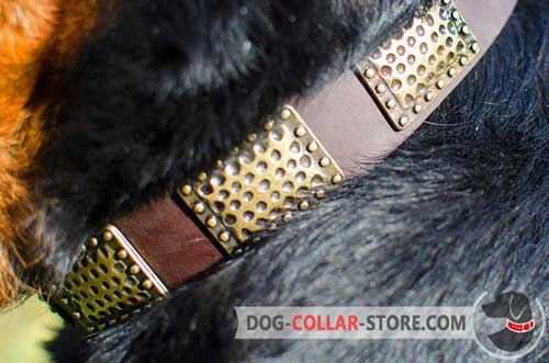 Rust Proof Brass Plates on Vintage Leather Dog Collar