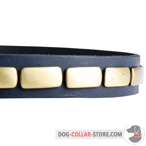 Rust Resistant Brass Plates on Leather Dog Collar