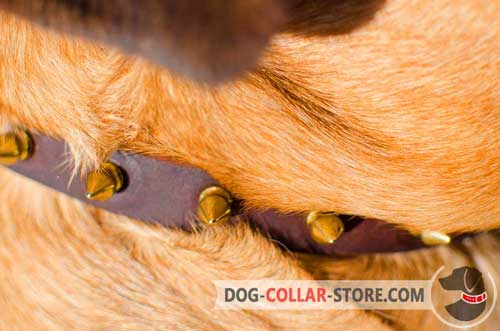 Golden Brass Spikes on Dog Collar made of Leather