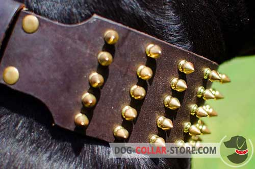 Gold-Like Spikes on Extra Wide Leather Dog Collar