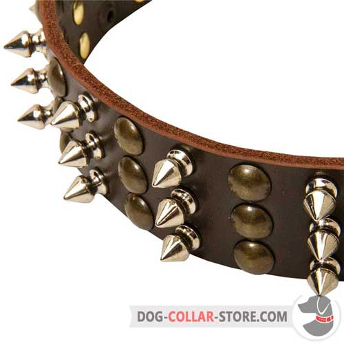 Designer Spikes and Studs on Leather Dog Collar