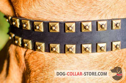 Fashionable Brass Studs on Easy Adjustable Leather Dog Collar