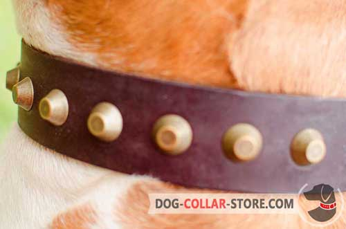 Golden Brass Studs on Designer Leather Dog Collar