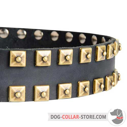 Hand-Set Sparkling Brass Studs on Designer Walking Leather Dog Collar