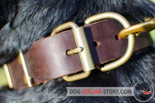 Rust Proof Brass Buckle on Plated Leather Dog Collar