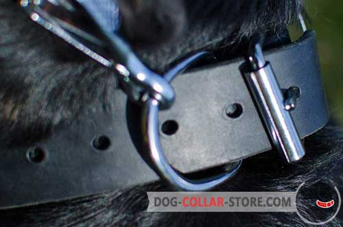 Nickel Plated Buckle On Durable Leather Dog Collar