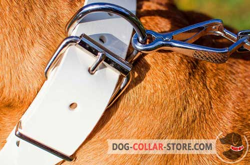 Stainless Buckle On White Leather Dog Collar