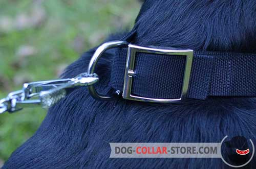 Resistant to Rust Buckle On Reliable Nylon Dog Collar