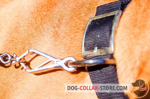 Resistant to Rust Buckle On Strong Nylon Dog Collar
