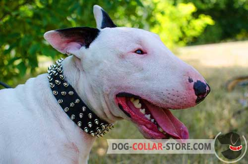Designer Leather Bull Terrier Collar with 3 Rows of Spikes