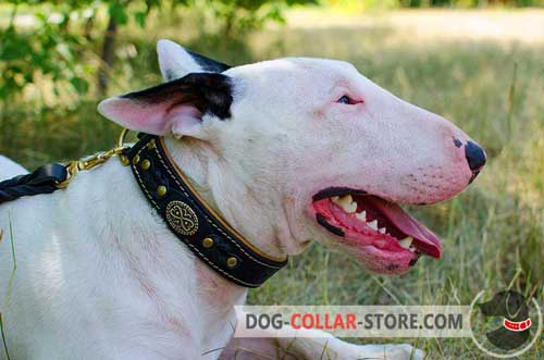 Soft Nappa Padded Leather Dog Collar for Bull Terrier Walking