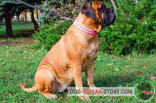 Professionally Designed Adjustable Pink Leather Bullmastiff Collar for Training