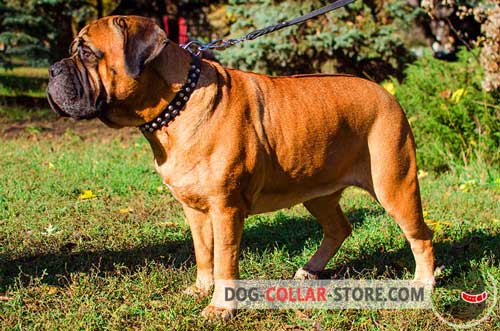 Durable Leather Bullmastiff Collar