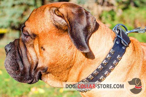 Fashion Adjustable Leather Bullmastiff Collar