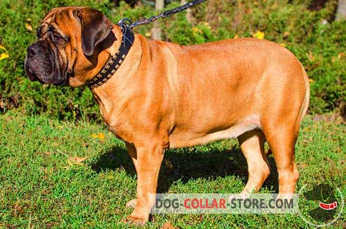 Fashion Adjustable Leather Bullmastiff Collar for Walking
