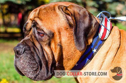 American Pride Hand Painted Leather Dog Collar for Bullmastiff