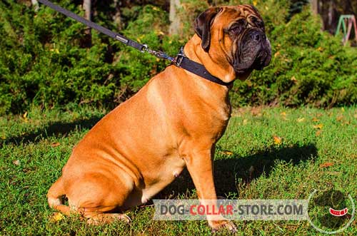 Durable Nylon Bullmastiff Collar for Effective Training