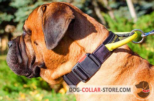 Nylon Bullmastiff Collar With Quick Release Buckle And Handle