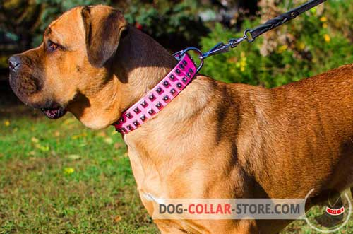 Pink Leather Cane Corso Collar With Stylish Studs