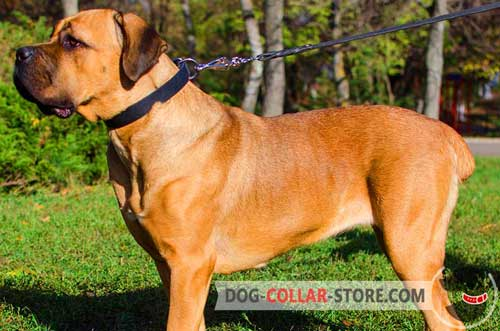 Classic Leather Dog Collar for Cane Corso Walking