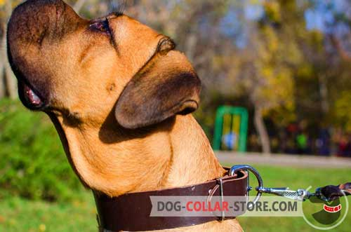 Easily Adjustable Leather Cane Corso Collar