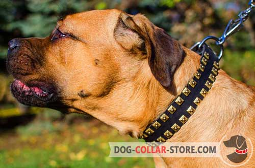 Walking Leather Cane Corso Collar with Tetragonal Studs