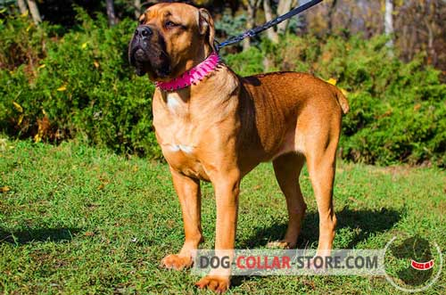 Pink Leather Cane Corso Collar Decorated with with Two Rows of Spikes