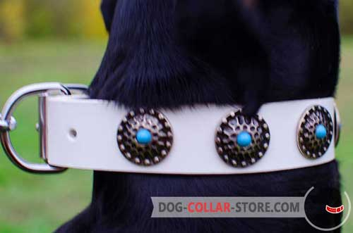 Marvelous Nickel Circles With Blue Stones On Leather Dog Collar