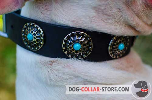 Fashion Silver Plated Circles on Fabulous Leather Dog Collar