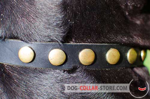 Shiny Corcles on Fashion Walking Leather Dog Collar