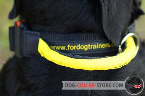 Additional Handle on Nylon Dog Collar