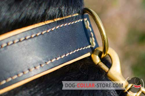 Brass-plated D-Ring on Nappa Padded Leather Dog Collar to Attach your Lead