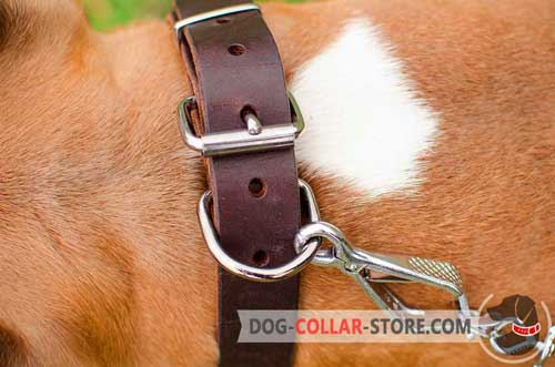 Nickel Plated D-ring on Classic Leather Dog Collar for Easy Lead Attachment