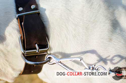 Extra Wide D-Ring on Studded Leather Dog Collar to Quickly Attach the Lead