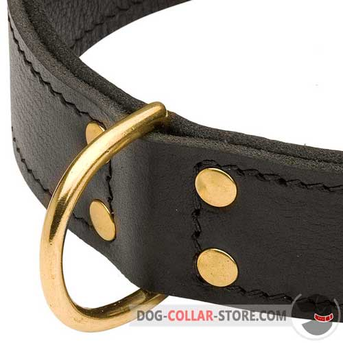 Wide D-ring on Leather Dog Collar for Walking