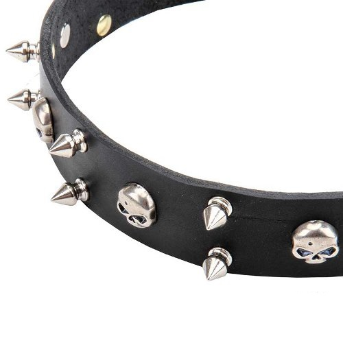 Dog Collar with nickel-plated hardware