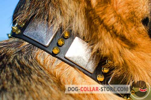 Duly Riveted Decorations On Leather Dog Collar