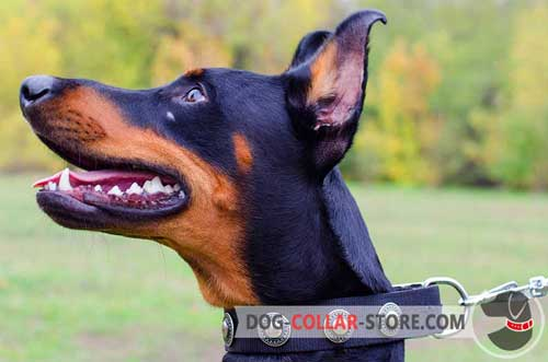 All Weather Nylon Doberman Collar Adorned with Circles